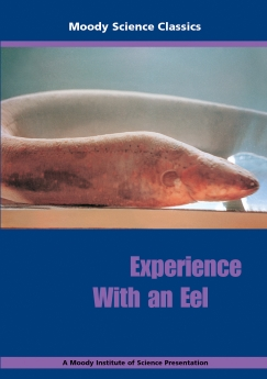 Experience with an Eel